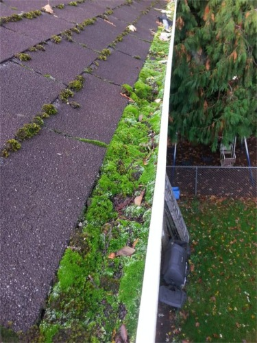 Seattle Tacoma Roof And Gutter Cleaning Services Window